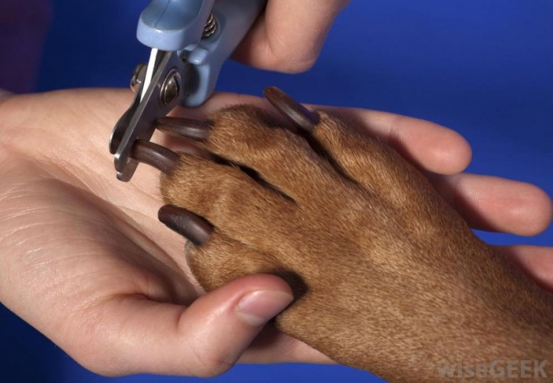 Nail Clipping (Pawdicure)